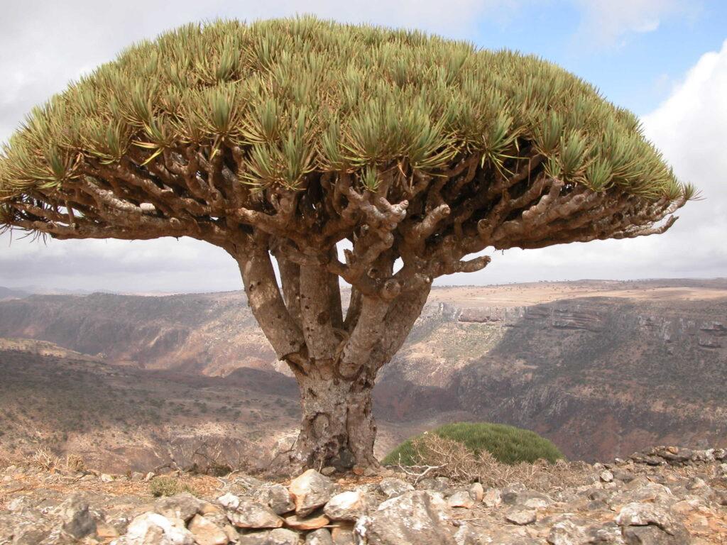 Socotra Archipelago in Yemen, Hadhramaut 1